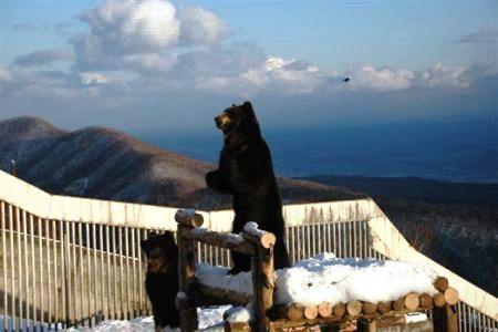 Япония. Адский курорт Ноборибецу. Медведи