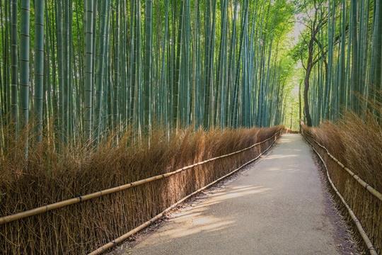 Yaponiya-bambukovyi-les, Arashiyama, Kyoto