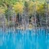 Путешествие по Японии. Голубой пруд