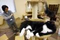 """""""Няшный"""" день, или Почему кошка - это собака в траве на рисовом поле"""