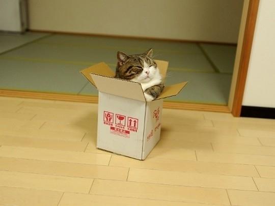 Кот Мару. Всё о Японии