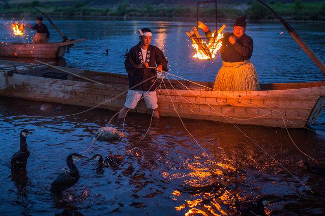 Укаи-ночная рыбалка с бакланами. Япония3