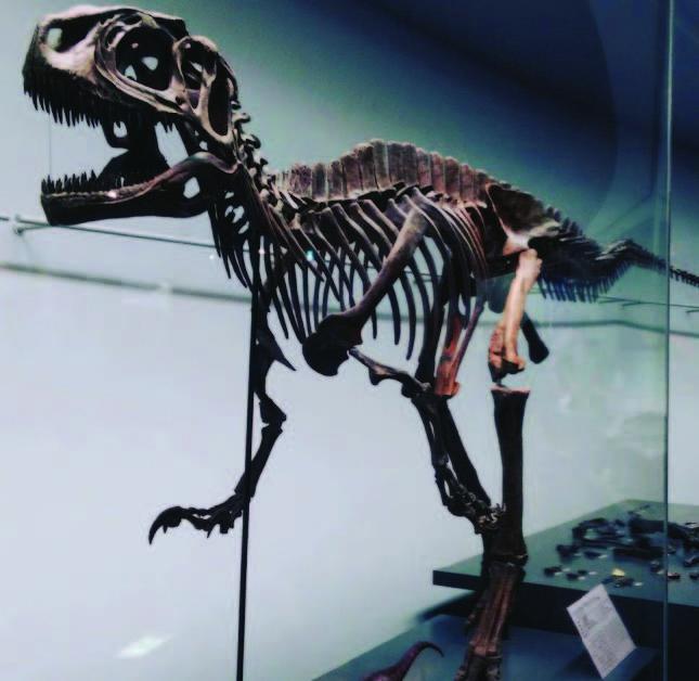 Yaponskiy_muzey_dinozavrov