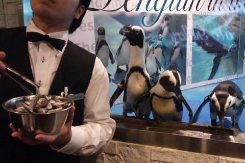 Pingviniy_bar_v_stolitse_Yaponii