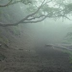 Японский лес Аокигахара - лес призраков