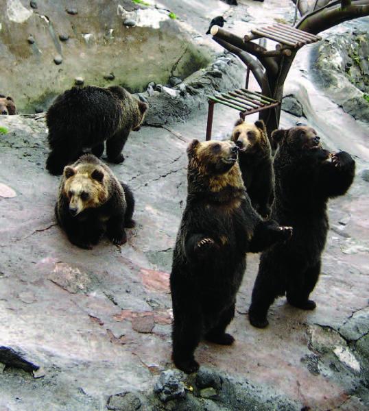 Noboribetsu_gde_zhivut_medvedi