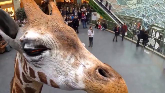 Yaponskiy_zoopark